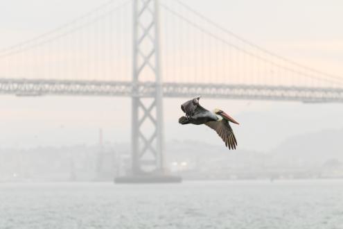 Pelican Bay...Bridge