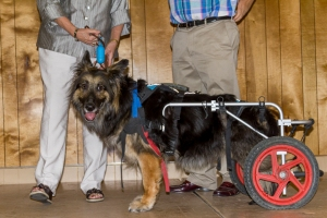 mathieucristofor_eventphotography_secondchancegermanshepherdrescuegala2015_206