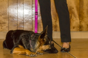 mathieucristofor_eventphotography_secondchancegermanshepherdrescuegala2015_214