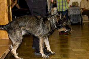 mathieucristofor_eventphotography_secondchancegermanshepherdrescuegala2015_248